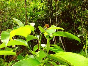 Ontdek het Sinharaja regenwoud