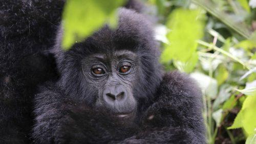 Reizen naar    Best of Uganda