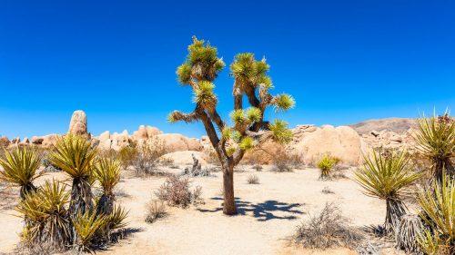 Reizen naar  | Best of the Southwest