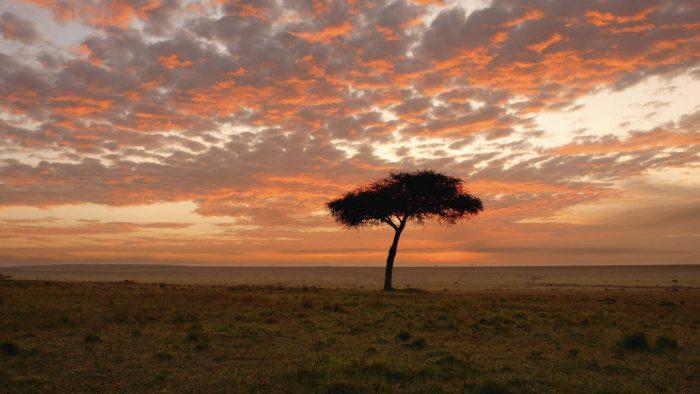 Reizen naar    Kenya Explorer