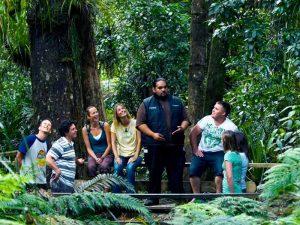 Maori Forest Trail