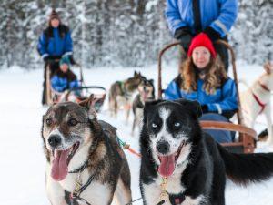 Ylläs: in de wildernis van Fins Lapland