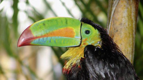 Reizen naar    Best of Costa Rica