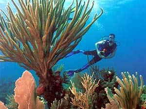 Cuba koralenstrand