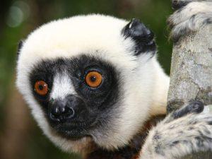 De waterschatten van Madagaskar