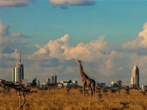 Easy Going Nairobi