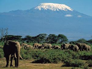 De berg en de olifant - Amboseli