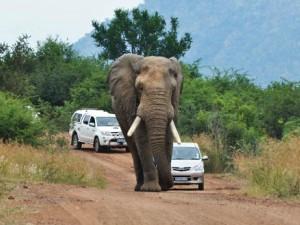 Rondreis 8: Onze korte safari-reis