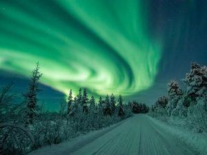 Zweeds Lapland: Huskey's